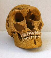MOULAGE FOSSILE crane Néanderthal homme la Ferrassie skull fossil cast replica
