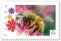 BEE = HONEYBEE on Pink flower = postage stamp MNH Canada 2018 [p18-09-05]