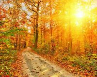 Autumn Sunset - Forest Trees Country Nature Landscape Wall Art Canvas Pictures