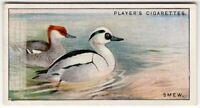 Smew Duck Mergellus albellus Gamebird c90  Y/O Ad Trade Card
