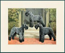 KERRY BLUE TERRIER THREE DOGS DOG PRINT MOUNTED READY TO FRAME