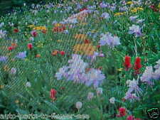 1/32 - POUND BUTTERFLY HUMMINGBIRD 15-VARIETY WILDFLOWER SEEDS MIX