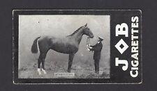 JOB - RACEHORSES - RUSHCUTTER