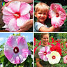 100 Giant Hibiscus Flower Seeds DIY Home Garden potted or yard flower seeds