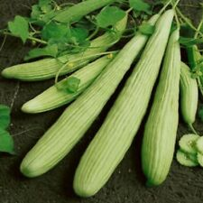 30 Pcs Long Green Vegetable Seeds Delicious Organic Cucumber Plant Home Garden