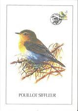 FDC 2936 - Oiseau Buzin sur gravure format A4 !