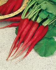 20 Ravanello candela di FUOCO seeds vegetable orto ortaggio raphanus garden semi