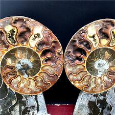 1524g a Pair of Split Iridescent ammonite fossil slices polished Specimen   K126