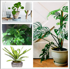 100 Pcs Seeds 12 Kinds Bonsai Mix Philodendron Grape Leaf Plants Tree Garden New
