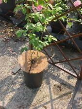 Kokos-Mulchscheiben, 30 cm 6 Stck.,Mulchscheibe,   Pflanzenschutz ,