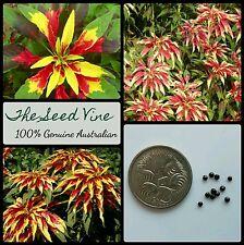 100+ JOSEPH'S COAT SEEDS (Amaranthus gangeticus) Tricolor Yellow Red Edible
