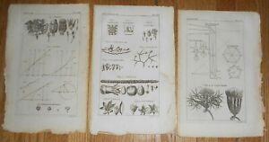 Lot of 3 Antique 1763 Botanical Prints of Botany Crocus etc Printed in 1763