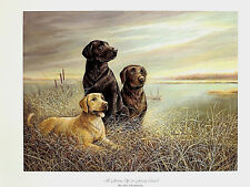 LAB DOG PICTURE BLACK GOLDEN CHOCOLATE LABS ART PRINT ONLY 16X20