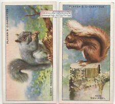 Lot of 2 Squirrel Types - Red and Grey 1930s Trade Cards 2