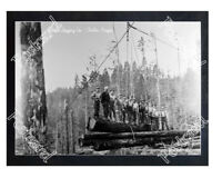 Historic Sunset Logging Co. - Timber, Oregon Logging crew Postcard 2