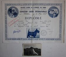 1937 DIPLOME EXPOSITION CANINE esposizione canina Blida لبليدة  Épagneul breton