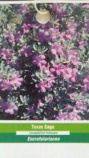 3 gal. TEXAS SAGE Shrub Live Flowering Purple Home Landscape Plants Garden Bush