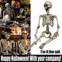 Poseable Full Life Size Human Skeleton Dad Son Halloween Decoration Party Prop