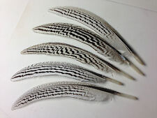 5 x 20-25cm Silver Pheasant Feathers DIY Craft Millinery Smudge Fan