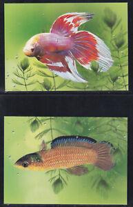 Thailand 2002 4 postcards Fighting Fish