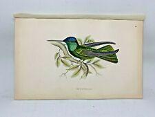 DELUXE ED Hand-colored Plates 1840 Jardine History Hummingbirds #18 Rivoli's