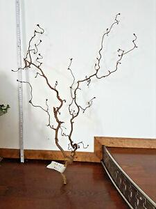 Korkenzieherhasel Zweig 70 cm Dekoration Korkenzieher Ast Unbehandelt Nr.12