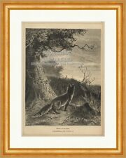 Reineke sur la galaxie forêt chasse lapin MAFFEI était repas silence Gravure sur bois E 19793