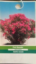 Pink Oleander Plant Flowers Easy to Grow Home Landscaping Plants Shrub Garden