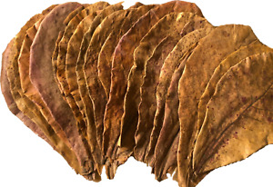Catappa Leaves Indian Almond Leaves 6+ Inches, Water Modifier, Discus, Betta USA
