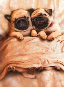 Avanti funny greeting card Valentine Valentine's love puppies snuggle