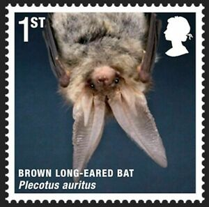 Brown Long-eared Bat on 2010 stamp