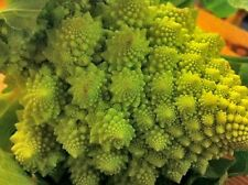 Cauliflower Seeds- Yellow Romanesco- 200+ '16 Seeds     $1.69 Max Shipping/order