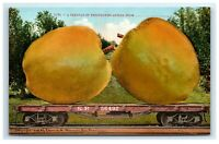 Postcard Carload of Bellflower Bell Apples 1910 Edward Mitchell Exaggerated H24