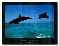 Doug Perrine Dolphin Jumping Ocean Wall Decor Picture Art Print Poster (22x28)