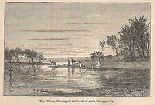 A2621 Paesaggio sulle coste della Senegambia - Xilografia del 1895 - Engraving