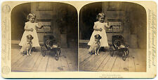 Stereo view The jealous doggie girl with dog and cat Underwood Animals 1891 S980