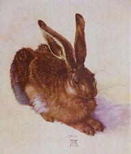 "Albrecht Durer A Young Hare Rabbit Painting 12.5/"" x 14/"" Real Canvas Art Print"