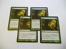 4x MTG JAPANESE Mulch-Concime Magic EDH ISD Innistrad Modern Asian x4