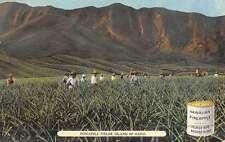 Oahu Hawaii Pineapple Fields Native Workers Antique Postcard K44921