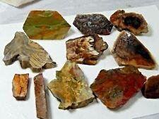 Oregon Jaspers & Petrified Wood specimens or Slabs Lot of 11 8.4 Oz.