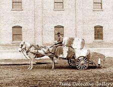 Horse-Drawn Cart Hauling Cotton, Mobile, Alabama - 1906 - Historic Photo Print