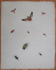 Caspar Stoll Original Large Colored Engraving Insects  Bugs (18) - 1780