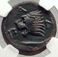 PANTIKAPAION in Bosporus 310BC Authentic Ancient Greek Coin PAN LION NGC i69798