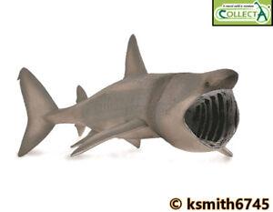 CollectA 22cm BASKING SHARK plastic toy wild zoo sea animal FISH  NEW 💥