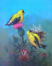 Gold finch or Wild Canary, by Owen Gromme