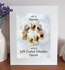 """Soft Coated Wheaten Terrier Life is Merrier 10x8"""" Mounted Print Picture Fun Gift"""