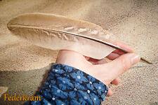 Fasan S Feder Schreibfeder, Kalligraphie Federkiel feather quill pen