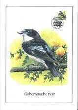 FDC 2654 - Oiseau Buzin sur gravure format A4 !
