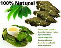 Soursop Leaves Dried Organic Guanabana Graviola Herbal Tea Annona Muricata 200+