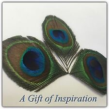 NEW! 3 Hand trimmed large eye peacock natural feathers 7cm craft millinery DIY